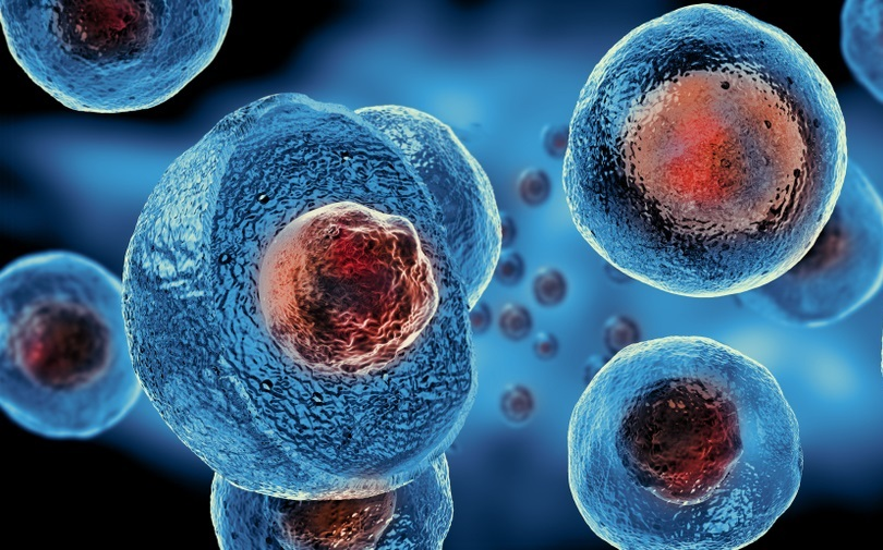 Image shows an embryonic stem cell