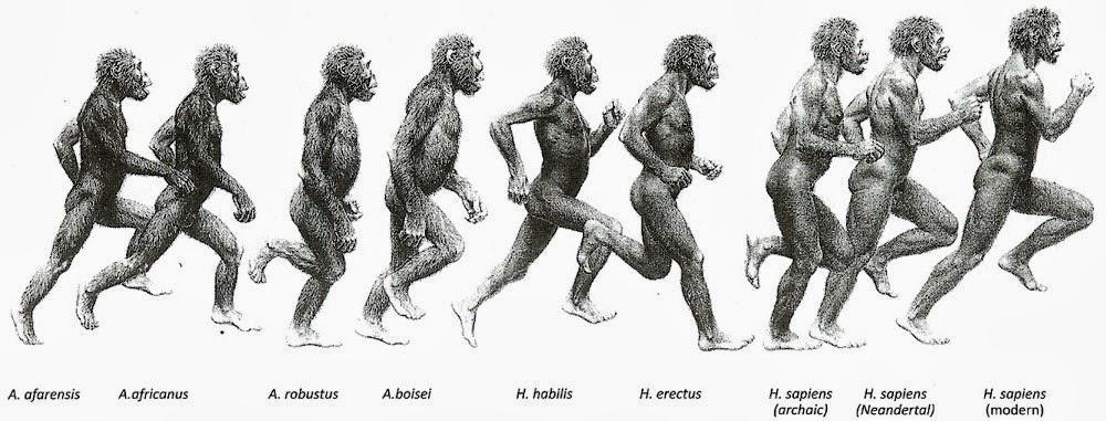 Human evolution in running