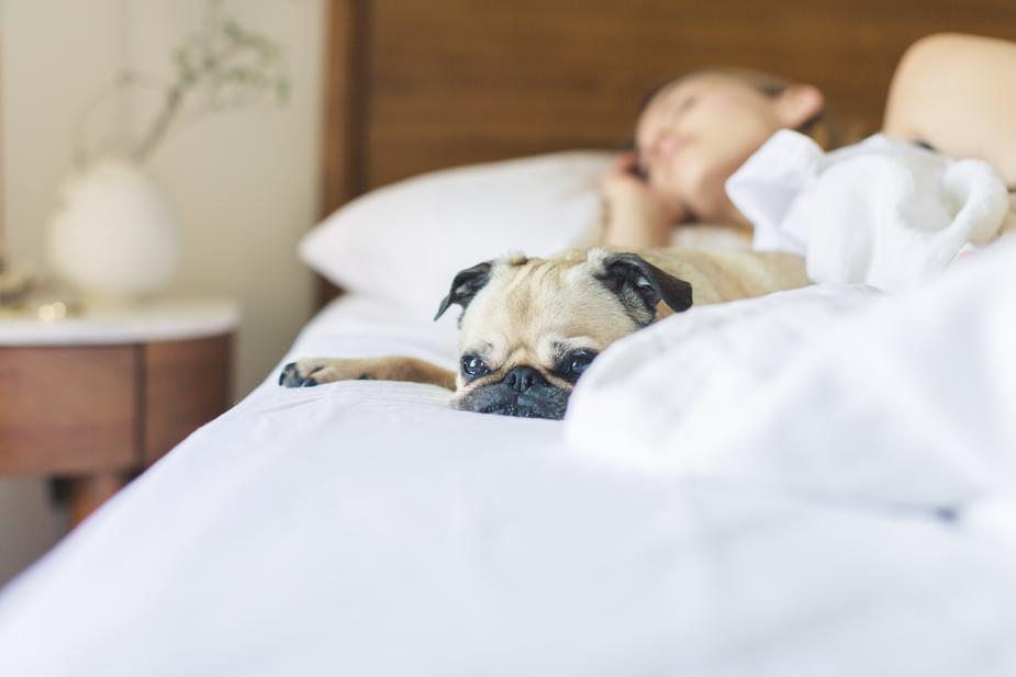 A pug and their owner taking a nap.