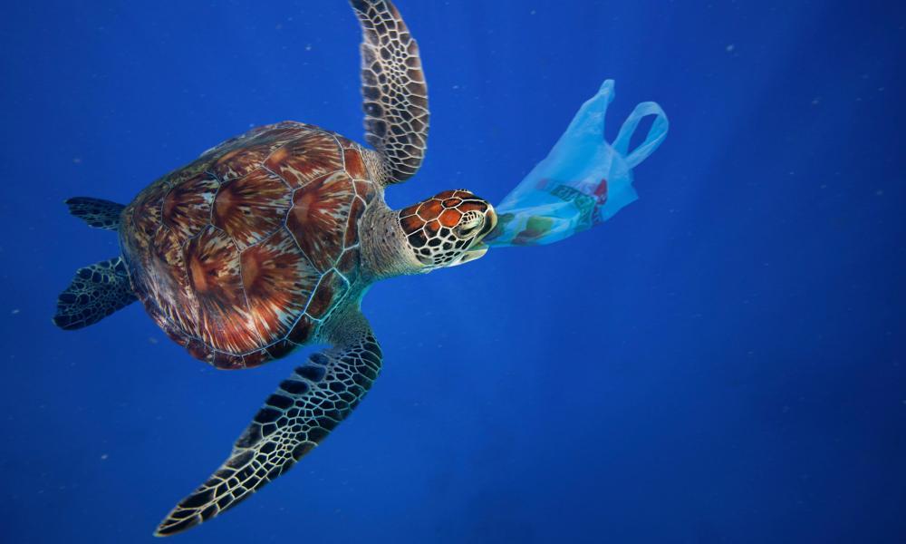 Sea turtles mistake plastic bags for jellyfish.