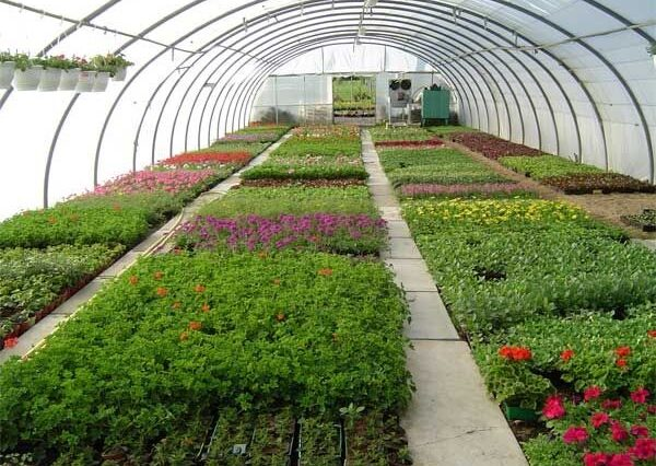 Rows of rectangular sections of plants are seen in a greenhouse.